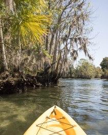 Kayaking with manatees