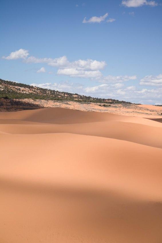 Beautiful shadows on the sand dunes