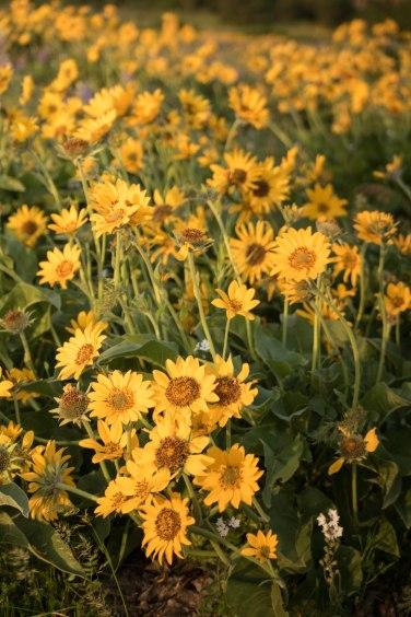 Rowena Crest Flowers 3