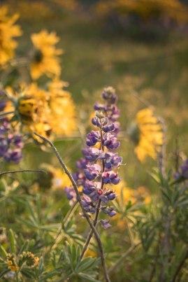 Rowena Crest Flowers 4